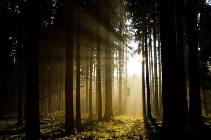 Sonnenuntergang im Wald in Oberfranken