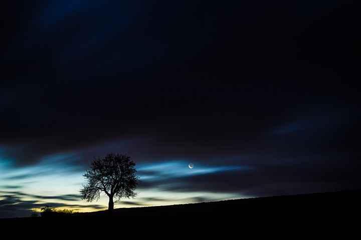 Baum am frühen Morgen bei Görau