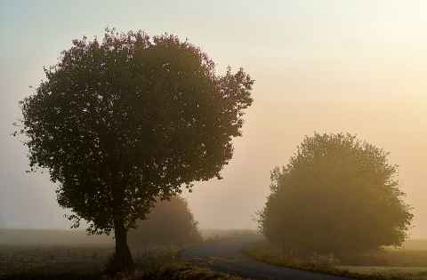 Herbstmorgen am Radweg Kasendorf