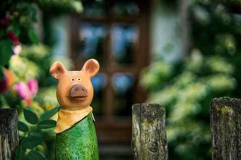 Schwein am Zaun