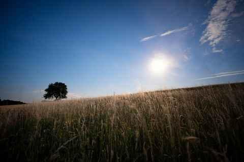 Vollmond mit Baum und Gras am Görauer Anger