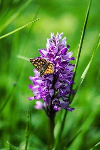 Blume mit Schmetterling bei Welschenkahl