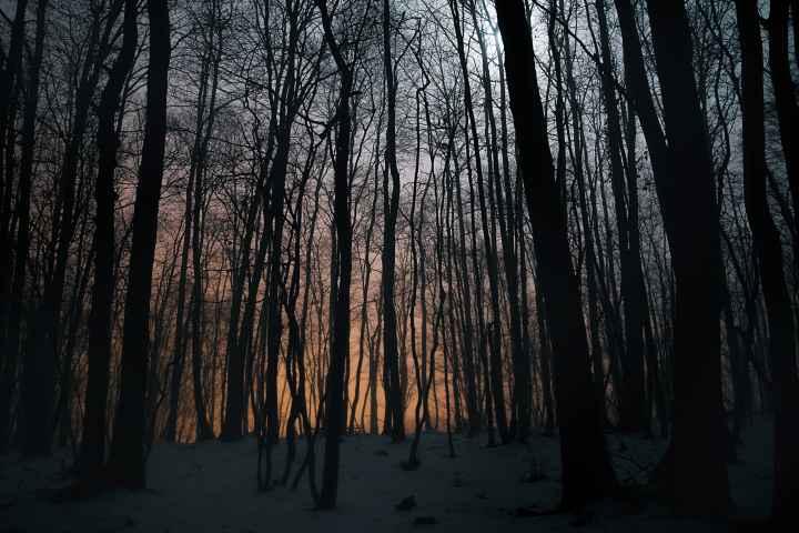 Nebel im Wald bei Reuth nahe Kasendorf