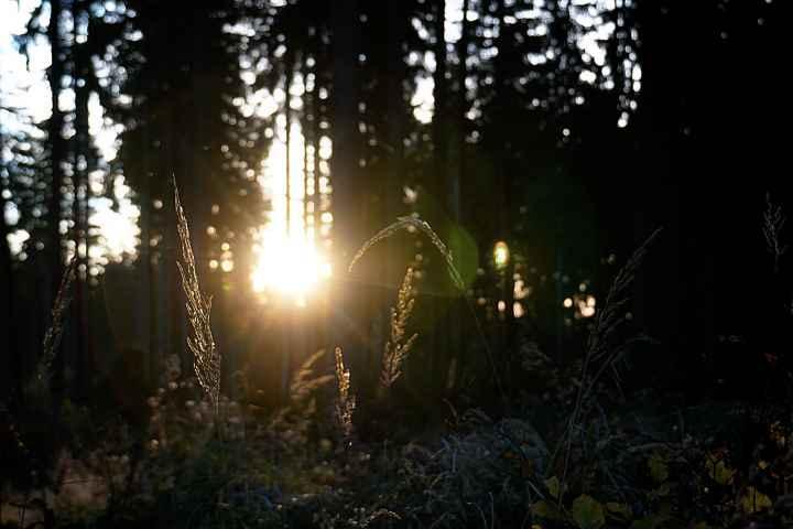 Sonne im Frankenwald