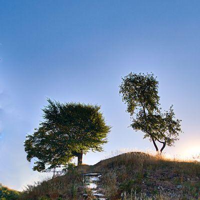Baum an der Burgruine Niesten